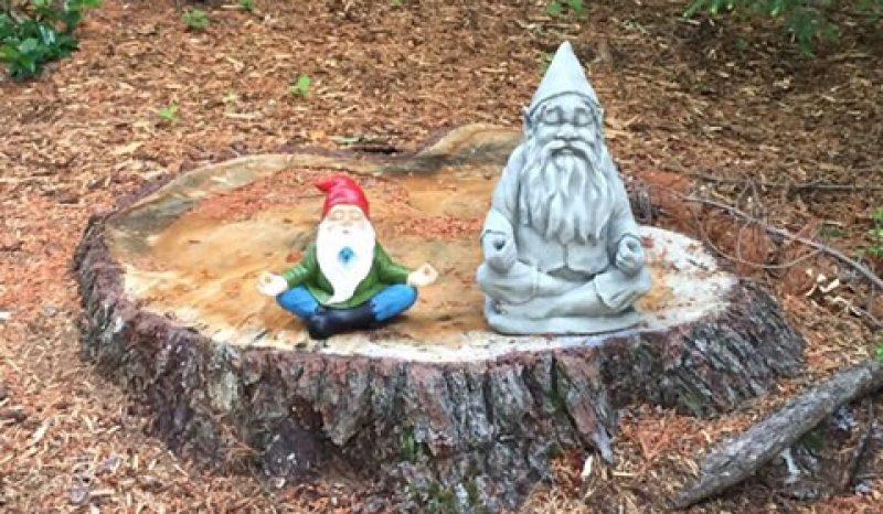 meditating gnomes