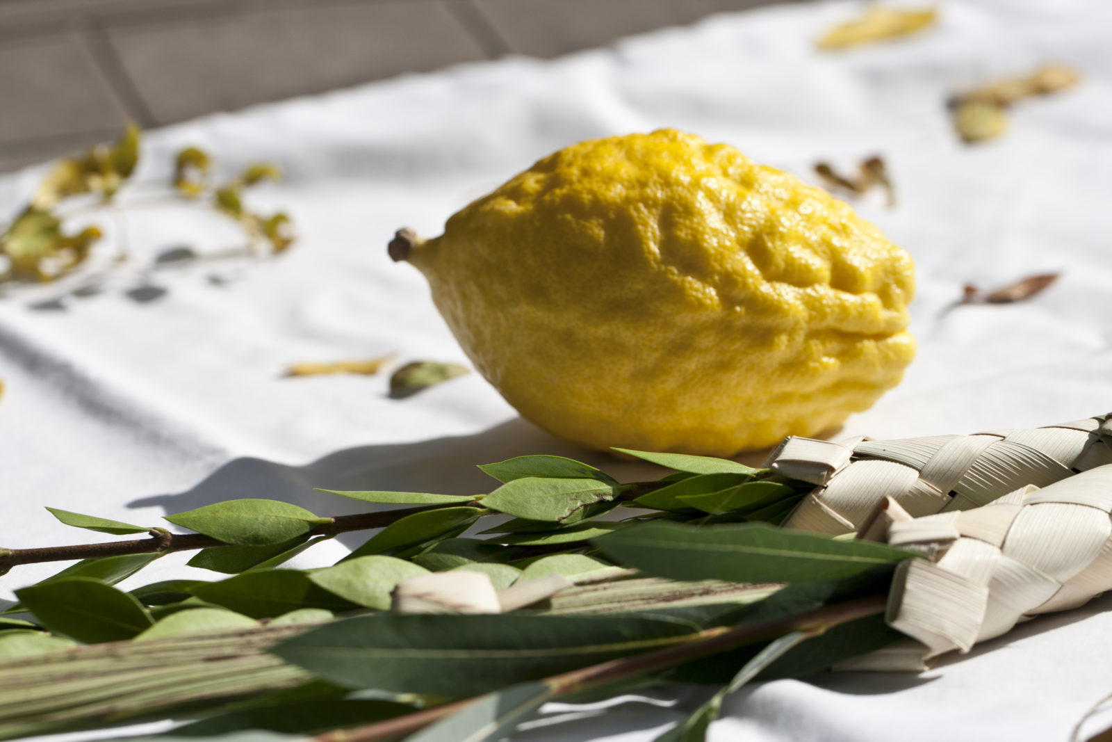 The Meaning Of The Lulav And Etrog Breaking Matzo
