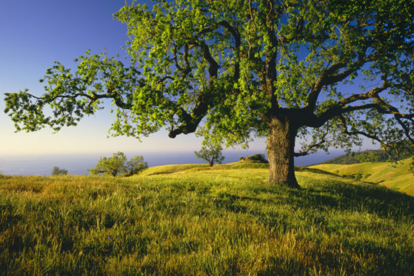 Have You Ever Had a Love Affair with…a Tree?